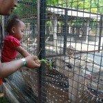 Senangnya Diajak Wisata Ke Kebun Binatang